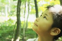 見上げる男の子 11070009953| 写真素材・ストックフォト・画像・イラスト素材|アマナイメージズ