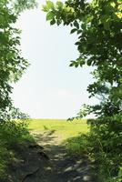 緑の木と草原
