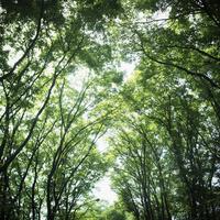 緑の木々 11070010004| 写真素材・ストックフォト・画像・イラスト素材|アマナイメージズ