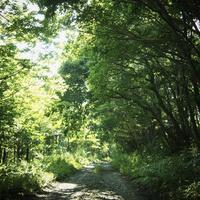 緑の森林と小道