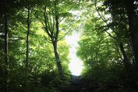 森林 11070010007| 写真素材・ストックフォト・画像・イラスト素材|アマナイメージズ