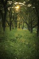 森林と夕日