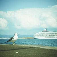 ウミネコと船
