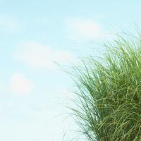 草と青空 11070010188| 写真素材・ストックフォト・画像・イラスト素材|アマナイメージズ