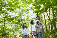 木々を見上げる4人の子供達 11070010419| 写真素材・ストックフォト・画像・イラスト素材|アマナイメージズ