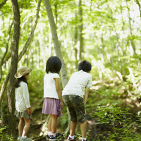 森林を覗く3人の子供達 11070010441| 写真素材・ストックフォト・画像・イラスト素材|アマナイメージズ