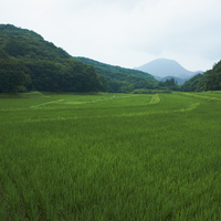 緑の田園 11070010500| 写真素材・ストックフォト・画像・イラスト素材|アマナイメージズ