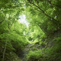 緑の森林 11070010512| 写真素材・ストックフォト・画像・イラスト素材|アマナイメージズ