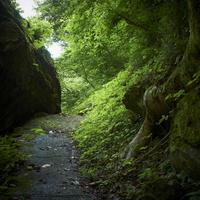 山道 11070010513| 写真素材・ストックフォト・画像・イラスト素材|アマナイメージズ