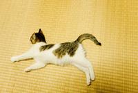 畳の上に寝転ぶネコ