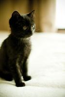 黒いネコ 11070010656| 写真素材・ストックフォト・画像・イラスト素材|アマナイメージズ