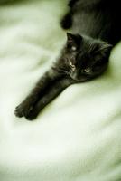 黒いネコ 11070010664| 写真素材・ストックフォト・画像・イラスト素材|アマナイメージズ