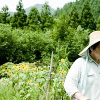 麦わら帽子を被ったシニア女性とヒマワリ畑