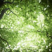 新緑 11070010958| 写真素材・ストックフォト・画像・イラスト素材|アマナイメージズ