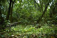 緑の森 11070012191| 写真素材・ストックフォト・画像・イラスト素材|アマナイメージズ
