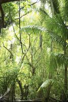 南国の森 11070012398| 写真素材・ストックフォト・画像・イラスト素材|アマナイメージズ