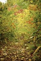 秋の森林 11070012525| 写真素材・ストックフォト・画像・イラスト素材|アマナイメージズ