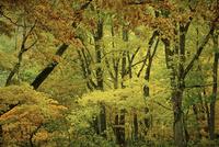 秋の森林 11070012528| 写真素材・ストックフォト・画像・イラスト素材|アマナイメージズ