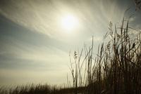 枯れ草と太陽
