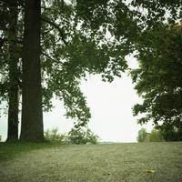公園の木々 11070012789| 写真素材・ストックフォト・画像・イラスト素材|アマナイメージズ