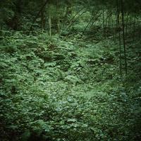 緑の草地 11070014902| 写真素材・ストックフォト・画像・イラスト素材|アマナイメージズ