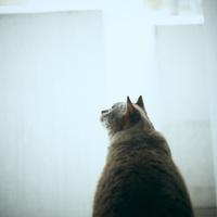 見上げるネコの後ろ姿 11070015144  写真素材・ストックフォト・画像・イラスト素材 アマナイメージズ