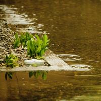 水たまりの波紋 11070017111| 写真素材・ストックフォト・画像・イラスト素材|アマナイメージズ
