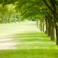 新緑の並木 11070017175  写真素材・ストックフォト・画像・イラスト素材 アマナイメージズ