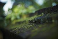 苔 11070017294| 写真素材・ストックフォト・画像・イラスト素材|アマナイメージズ