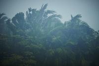ジャングルに降るスコール 11070017295| 写真素材・ストックフォト・画像・イラスト素材|アマナイメージズ