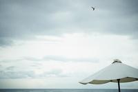 ビーチパラソルと空を飛ぶ鳥
