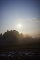 冬の田園と朝日と木々のシルエット