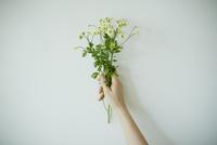 花束を持つ女性の手 11070017806| 写真素材・ストックフォト・画像・イラスト素材|アマナイメージズ