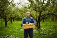 ラフランスが入った箱を持つ笑顔の農夫 11070018469| 写真素材・ストックフォト・画像・イラスト素材|アマナイメージズ
