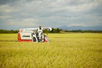 稲の収穫をする農夫 11070018492| 写真素材・ストックフォト・画像・イラスト素材|アマナイメージズ