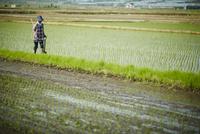 水田に立つ農婦