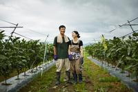 ナス畑に立つ農家夫婦