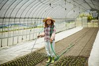 ビニールハウスで苗に水をやる農婦