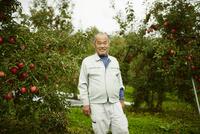 リンゴ畑の笑顔の農夫 11070018543| 写真素材・ストックフォト・画像・イラスト素材|アマナイメージズ