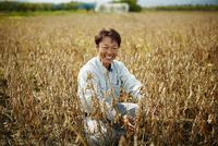 大豆畑の笑顔の農夫