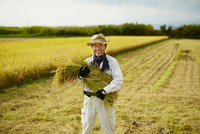 稲を抱える笑顔の農夫