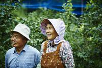 ブルーベリー畑の農家夫婦 11070018571| 写真素材・ストックフォト・画像・イラスト素材|アマナイメージズ