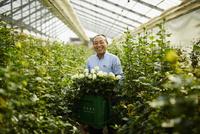 温室でバラの花を持つ笑顔の農夫