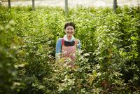 温室のバラの中に立つ笑顔の農婦 11070018580| 写真素材・ストックフォト・画像・イラスト素材|アマナイメージズ