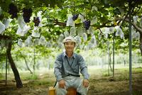 ブドウ畑の農夫