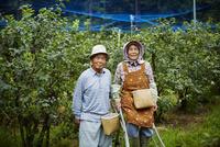 ブルーベリー畑に立つ農家夫婦
