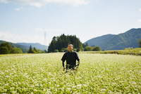 花咲くソバ畑に立つ農夫 11070018613| 写真素材・ストックフォト・画像・イラスト素材|アマナイメージズ