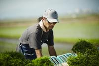 田植え作業をする農夫