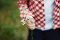 シロツメクサの花を持つ子供の手元