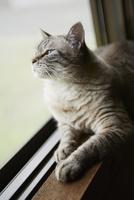 窓際のネコ